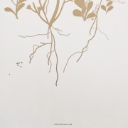 poster_roots_signature